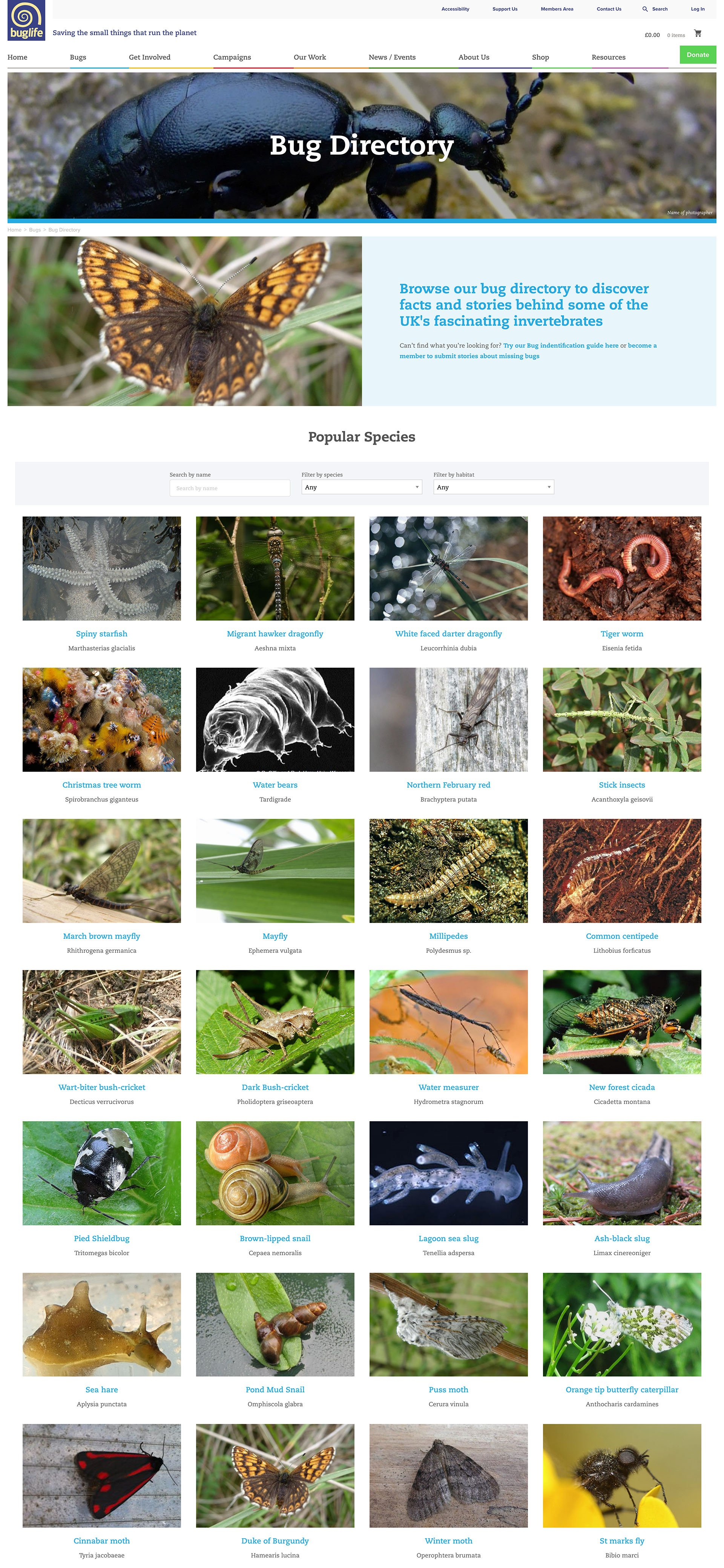Buglife Directory Desktop Screenshot